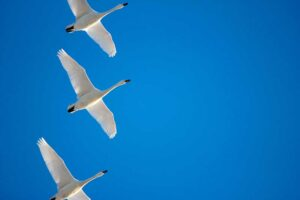Live Migration And Why It's Important For VMware Cloud Partners