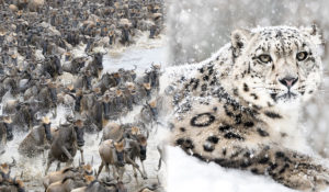 Some VMs are Wildebeest, some VMs are Snow Leopards